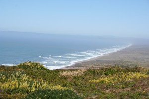 Point Reyes near Novato CA