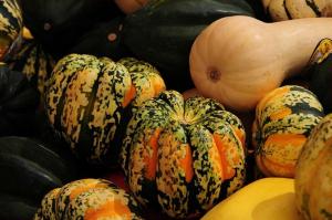 Organic squash Marin Farmer's Market visit Novato