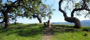 dog friendly hotels in dog friendly Novato