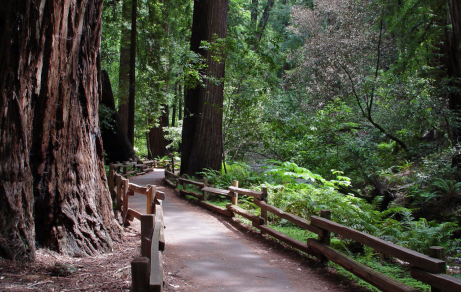 Muir Woods pathway