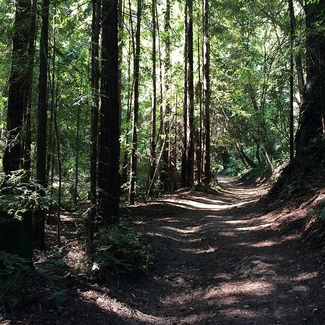 Serene woodland walking on Novato's Deer Camp Trail #novatobynature #findyourownpath