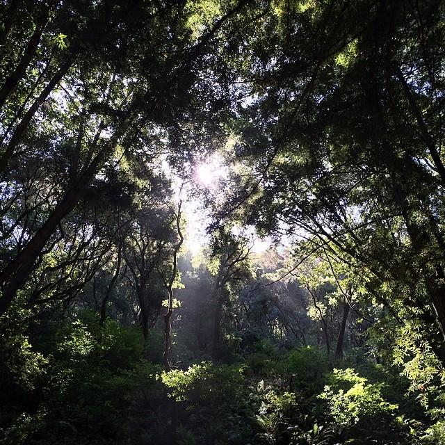 Sunshine through the redwoods at Indian Tree Preserve #novatobynature