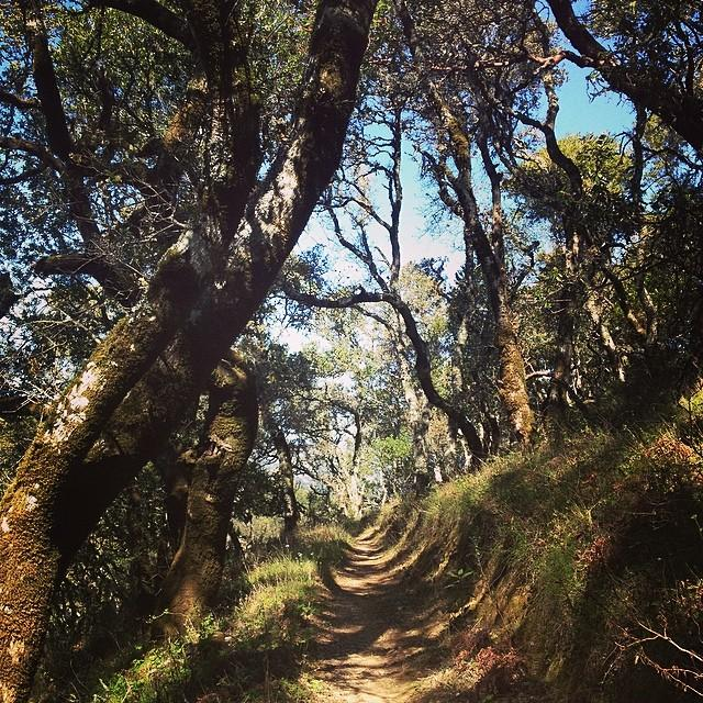 Big Tree Trail, Novato CA