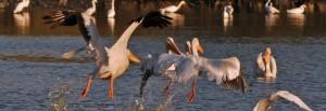bird-watching-in-novato
