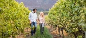 Couple walking among winery grape vines