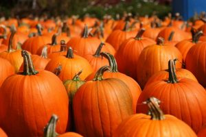 Grossi Family Farm Pumpkin Patch